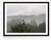Home Decor, Bird Print, Herons, Nature Photography, Nature Prints, Nature Art, Black and White Art, Fine Art Prints, Fine Art Photography
