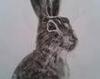 pastel drawing of a hare or a fox.