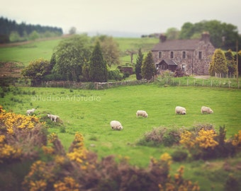 Scotland Countryside photography 8x10 print Landscape Photography Fine Art Photography Wall art Home decor Scotland decor Scottish landscape
