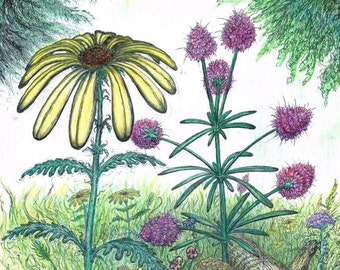 Forest Wild Flowers