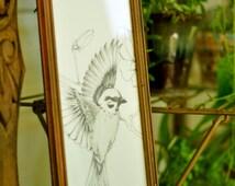 Bird Drawing, Bird Illustration, Bird Art, Bird Artwork, Bird In Flight, Magnolia, Shabby Chic Decor, Flowers, Pencil Drawing, Original