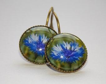 Cornflower earrings, Flower earrings, Cabochon earrings