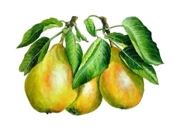 Pear painting, original watercolor, Art Print  - kitchen art, fruit painting 155