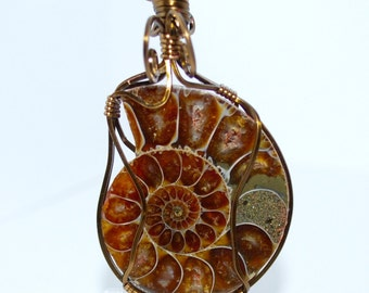 Polished, Ammonite Fossil Pendant, Wire Wrapped in Bronze Wire