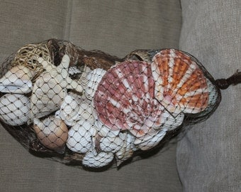 Sea Shells and Sea Shell Pieces, Over 2 Pounds Lot, Ocean Shells a Few Broken Sea Shells, Bulk Sea Shells, Seashells vary species. in a Bag