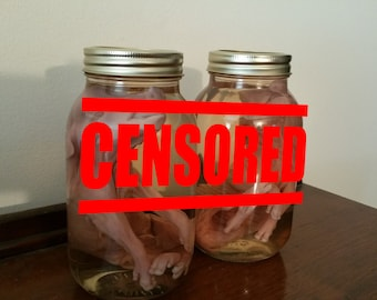 Wet Preserved Fetal Pig