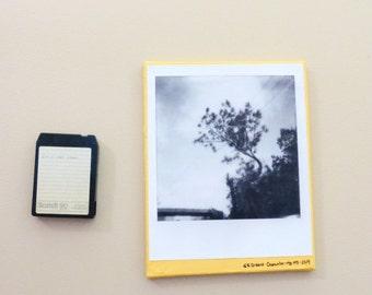 11x14 BIGGEROID polaroid print on canvas decoupage (wispy tree by the tracks (orange))