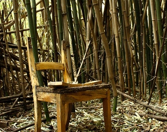 Within a Bamboo Forest