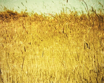 nature photography grass photograph field mint wall art yellow gold home decor summer print sring prints rustic landscape country decor