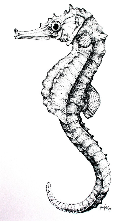 Cool Seahorses Drawing Seahorse Pen And Ink Drawing