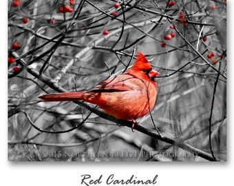 Red Cardinal - Fine Art Photography, Archival Photo Print, 5x7, 8x10, A6 Stationery