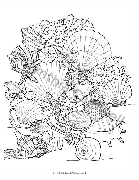 coloring pages of seashells | Seashells Coloring Page Instant Download por YetAnotherMomShop