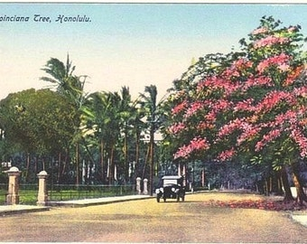 Antique Hawaii Postcard - Poinciana Tree in Honolulu (Unused)