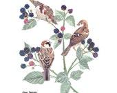 House Sparrows in Blackberry Bush