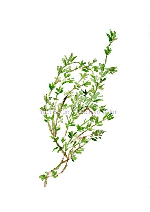 Art Print Thyme, herb print, watercolor painting, Kitchen decor, herb art, botanical print, green, foodie, kitchen art