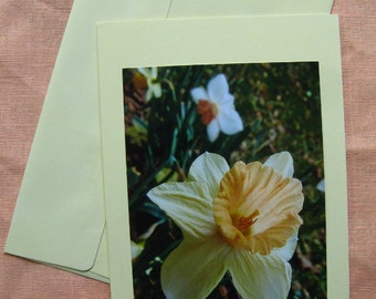DARLING DAFFODIL Flower Card, Daffodils Flowers on Ivory Yellow Cardstock Notecard, 5 by 7 Note Cards