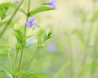 purple petals -delicate wildflowers-flower photography - photo- cottage garden  (5 x 7 Original fine art photography prints) FREE Shipping