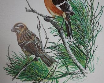 Vintage Wildlife Bird Print of a Blackheaded Grosbeak by American Artist Bob Hines