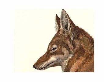 Wolf Vintage Style Art Print Brown Dog Fox
