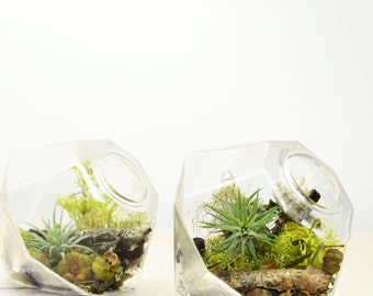 Superior Miniature Air Plant Terrarium// Gem// Home Decor// Green Gift/