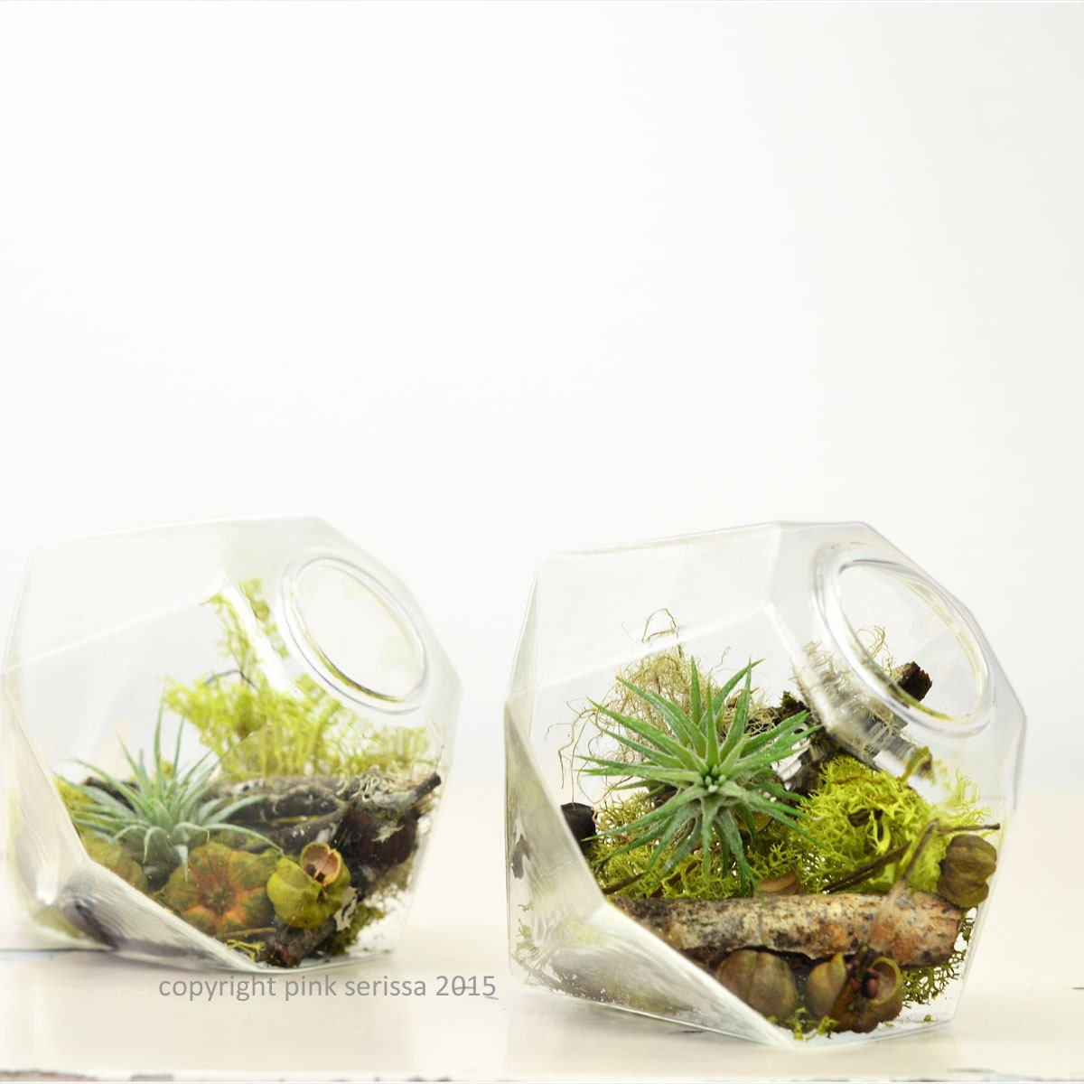 miniature air plant terrarium gem home decor green. Black Bedroom Furniture Sets. Home Design Ideas