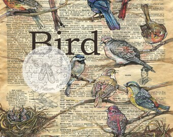 PRINT:  Birds Mixed Media Drawing on Antique Dictionary Page
