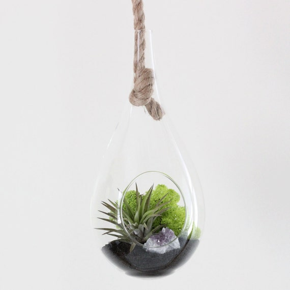 Air Plant Terrarium Kit with Amethyst Cluster