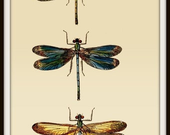 Art Print Dragonfly Victorian Insect 1847 - Print 8x10