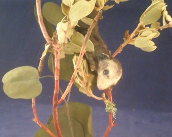 Antique Victorian inspired taxidermy Opossum in glass display dome I-11