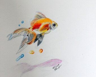 Original Pencil drawing, Goldfish,  9'' x 9''
