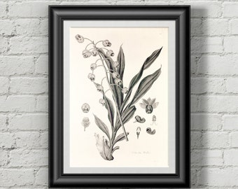 Lily of the valley botanical poster. Flower print. Flowers prints wall art Botanical print Wall art prints Wall art print Vintage botanical