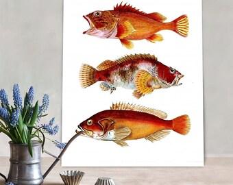 Fish art print - Orange Fantasy Fish - fish print fishing gift fishermans gift fish wall art Gifts for Men birthday gift for dad man cave