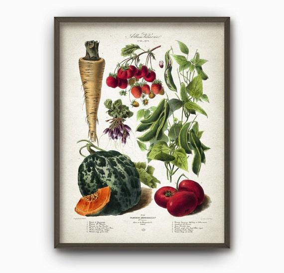 Kitchen Decor Vegetables: Kitchen Vegetables Antique Botanical Wall Art Poster Vintage