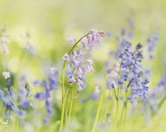 Pastel Flower Print - Photo Print, flower photography, spring, botanical art print, bluebells
