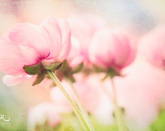 Sweet Poppies - Photo print, flower photography, spring, botanical, pastel, girl's room, soft pink