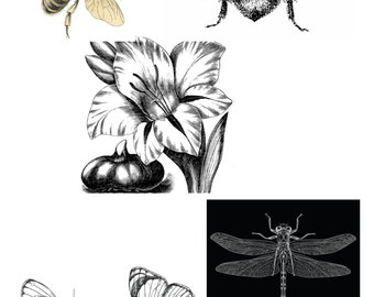 Instant download high resolution digital download bees