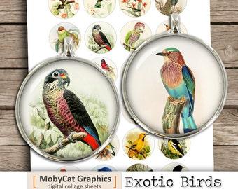"Exotic Birds Digital Collage Sheet 1"" 25mm 30mm 1.5""  Cabochon Printable Circle images Bottle cap images- Instant Download"