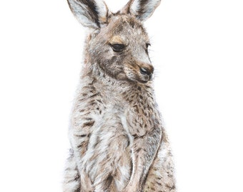 Kangaroo Art Print 8x10 - Baby Animal Print - Australian Wildlife Art - Art Print - Australian Nursery Animal Print