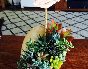 Hand crafted living succulent arrangement inside melon shell