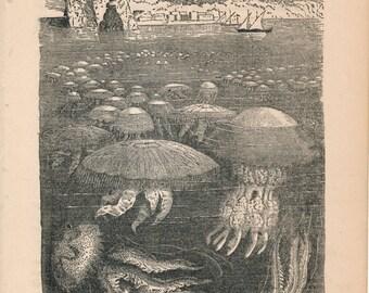 1887 Jellyfish Antique Print