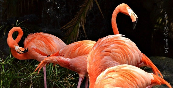 FLAMINGO HIDE 'N SEEK ~ Audubon Zoo ~ New Orleans, Louisiana ~ Feathered Friends Series ~ Zoo Photography