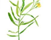 Tarragon art print ,watercolor print, herb art, botanical art print, Peridot green, mothers day, minimalist art, kitchen art,