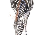 Zebra print of watercolour painting A4 size Medium Print Z4315