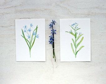 Blue flower botanical watercolor paintings . Set of 2 prints . Scilla Forgetmenot . Blue Spring Flowers in Watercolor . 5x7 print set