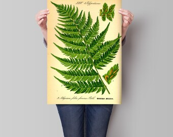 Fern print Botanical illustration Fern illustration Vintage botanical illustration Botanical wall art Fern wall art print
