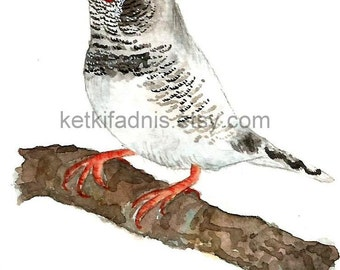 4 March 2015, Day 63 - White Zebra Finch- Original ACEO watercolor painting