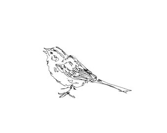 Bird Art - Giclee Print - Sparrow - songbird, line drawing, pen ink