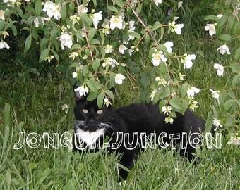 ON SALE,digital download, cat photograph, desktop picture, print, flower photograph,