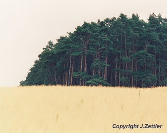 Landscape Photography, Germany, Pine Forest, Print