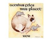 Celtic Art Grumpy Cat in Latin